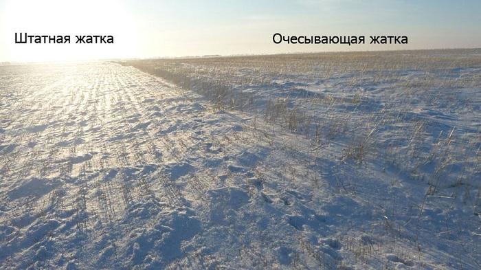Снегозадержание высоким стерневым фоном